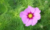 cropped-gs-cosmos.jpg